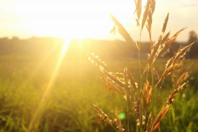 photograph of grasses with the setting sun in the background