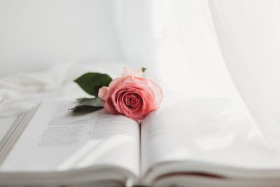 photograph of a pink rose on a white book
